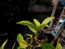 Soleil chaud avec l'arbre photographie stock