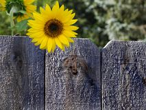 Soleil d'été Photo stock