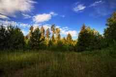 Soleil d'été en Russie Images libres de droits
