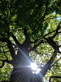 Soleil d'arbre Photos stock