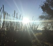 Soleil d'aube photos stock