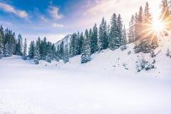Soleil d'hiver dans la forêt photos stock