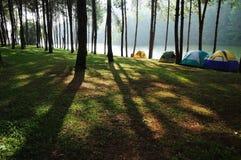 Soleil dans la forêt par le fleuve Photo libre de droits