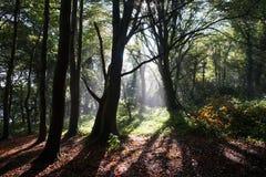 Soleil dans la forêt verte Photographie stock
