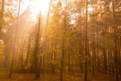 Soleil dans le bois d'automne Photos stock