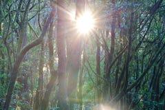 Soleil dans le contre-jour Photo stock