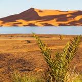 soleil dans le désert de jaune de lac du sable et de la dune du Maroc Photos libres de droits
