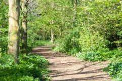 Soleil de chemin de cycle au printemps Images stock