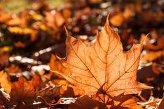 Soleil de feuille d'automne Photographie stock libre de droits