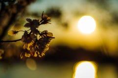 Soleil de fleur Photo libre de droits