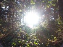 Soleil de forêt Photos libres de droits