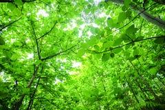 Soleil de matin à la forêt tropicale tropicale photo libre de droits