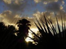 Soleil de matin Images stock