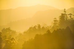 Soleil de matin au-dessus de la forêt brumeuse Photo stock