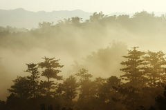 Soleil de matin avec le regain Images stock