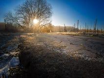 Soleil de matin dans les vignobles givrés et glacials Images libres de droits