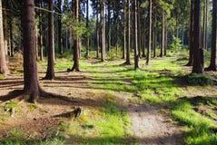 Soleil de soirée dans la forêt Photo stock