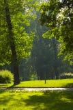 Soleil en stationnement vert Images libres de droits
