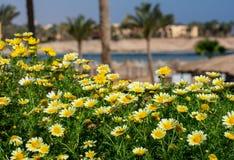 Soleil et fleurs jaunes dans un emplacement exotique images stock