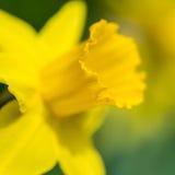 Soleil et printemps Image libre de droits