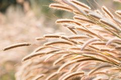 Soleil léger de gaieté d'herbe photo stock