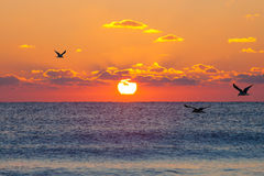 Soleil Levant rouge photo stock