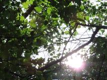 Soleil par des arbres Photos stock