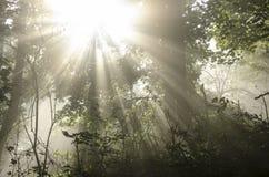 Soleil par des arbres image libre de droits