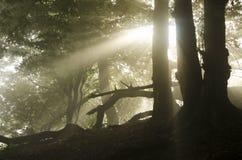 Soleil par des arbres photo stock