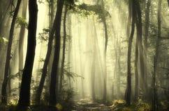 Soleil par des arbres Photographie stock libre de droits