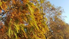 soleil par des feuilles Photo stock