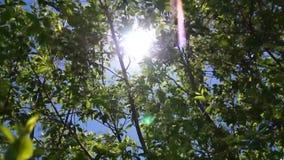 Soleil par des feuilles, ressort banque de vidéos