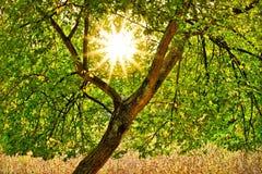 Soleil par l'arbre Photo libre de droits