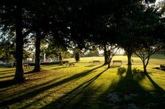 Soleil par les arbres image libre de droits