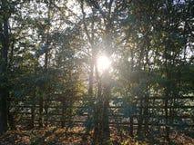 Soleil par les arbres Photos libres de droits