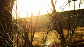 Soleil par les arbres photos stock