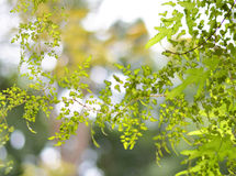 Soleil par les feuilles de fougère Faites-le sembler beau Photos libres de droits