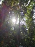 Soleil pendant le matin photographie stock libre de droits