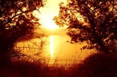 Soleil sauvage de bord de la mer Photo libre de droits