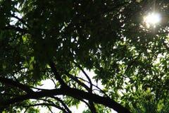 Soleil sous les feuilles images stock