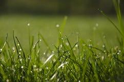 Soleil sur l'herbe humide Images stock