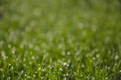 Soleil sur l'herbe humide Images libres de droits
