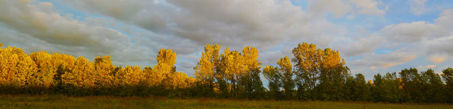 Soleil sur quelques arbres Photo libre de droits
