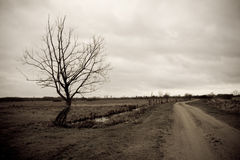 Solemn tree by the road. A perspective of a country road with a lonely tree in Biebrza National Park in Poland stock photos