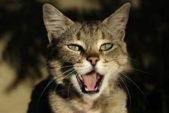 Solenóide-fa semelhante aos felinos Imagem de Stock Royalty Free