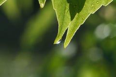 Solen är i en droppe på ett stycke av papper Arkivfoton