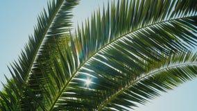Solen är i vändkretsarna Sidorna av en palmträd kan höras i en ljus vind, strålarna av solskenet stock video