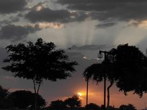 Solen är liv för träd royaltyfri foto