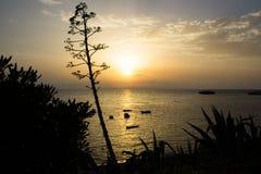 Solen att närma sig för att bevattna att rodna med sinnesrörelse royaltyfria foton
