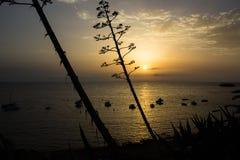 Solen att närma sig för att bevattna att rodna med sinnesrörelse royaltyfri bild